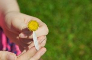 çiçek yapraklarını koparma