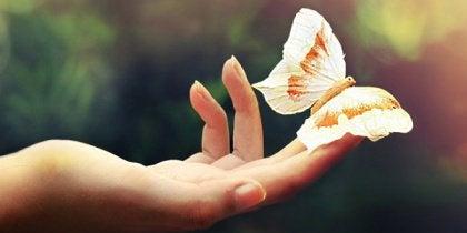 Eldeki kelebek