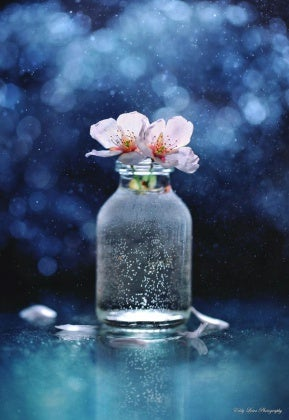 Kavanozdaki çiçekler