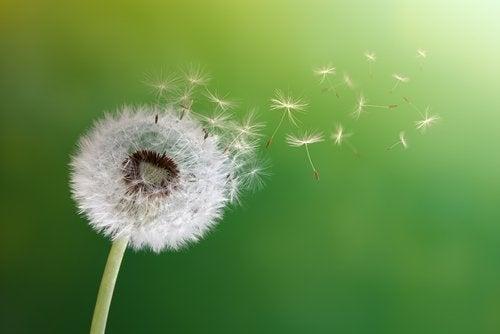 Kabullenme ve Değişimi Kucaklamak