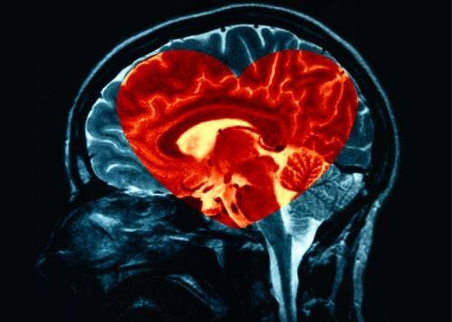 empati-beyin