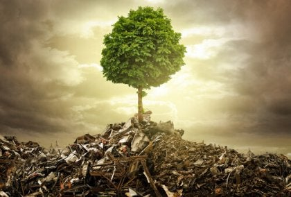Çöp yığınındaki ağaç