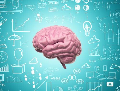 Nöroplastisite Sayesinde Öğrenmeyi Asla Bırakmıyoruz