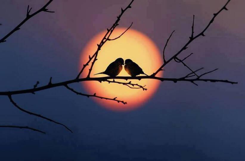 batan güneşte bir dala tüneyen iki kuş