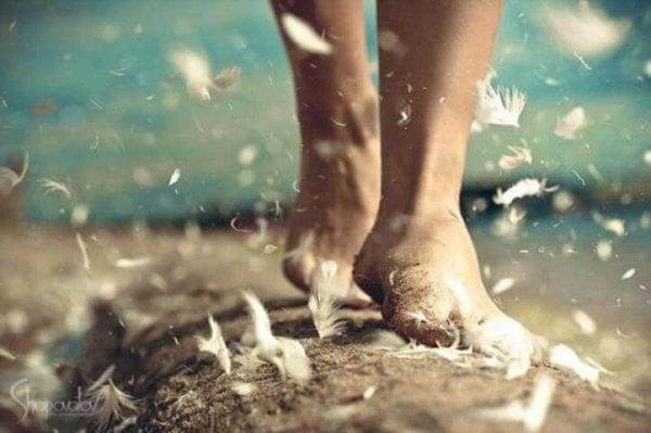 toprakta ilerleyen ayaklar ve uçuşan tüyler