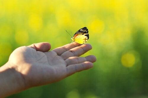 parmağa konan kelebek
