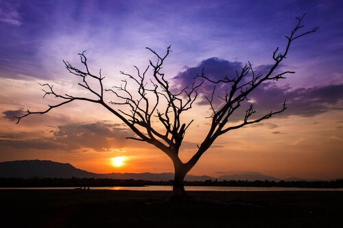 gün batımındaki yapraksız ağaç