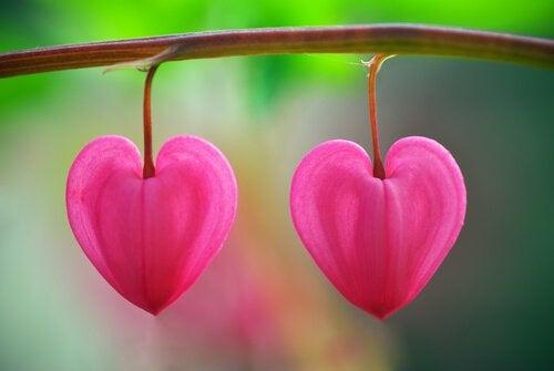 kalp şeklinde çiçek