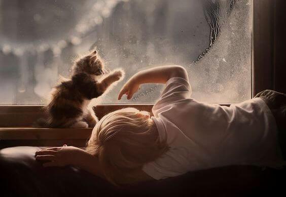 kedi çocuk cam kenarı yağmur