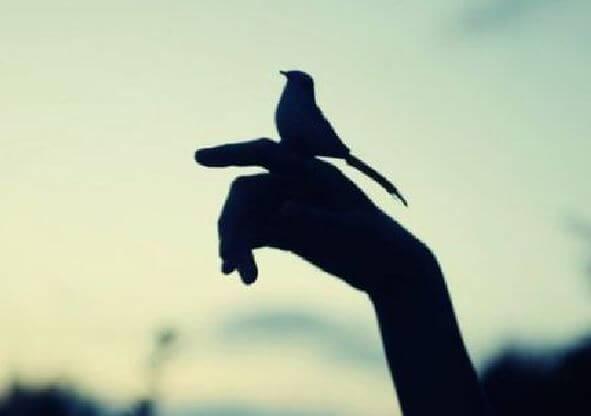 parmağa konan kuş