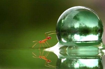 su baloncuğu iten karınca
