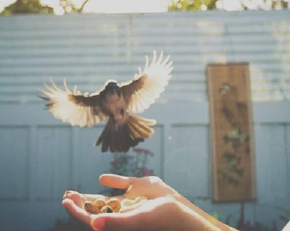 kuş besleyen el