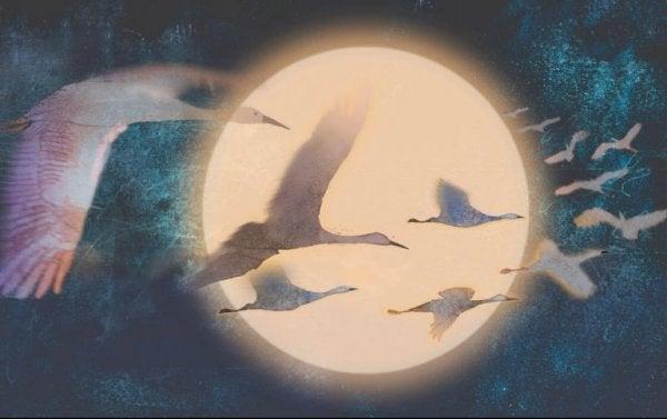 dolunayda uçan kuşlar