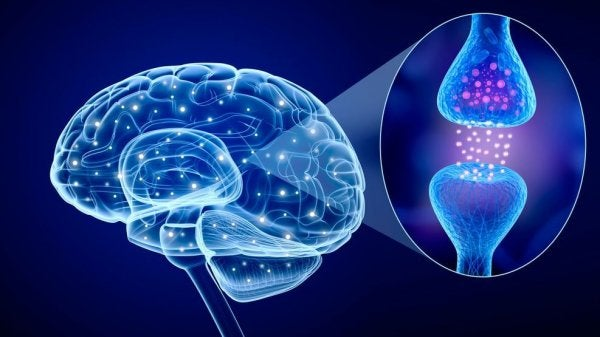 beyin nörotransmitterleri