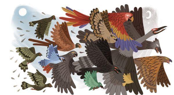 renk renk kuşlar