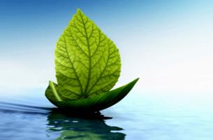 Kayık şeklindeki yaprağın suda taşıdığı başka bir yaprak