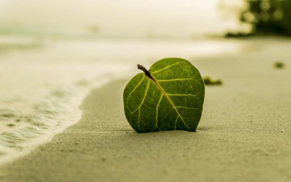 sahilde bir yaprak