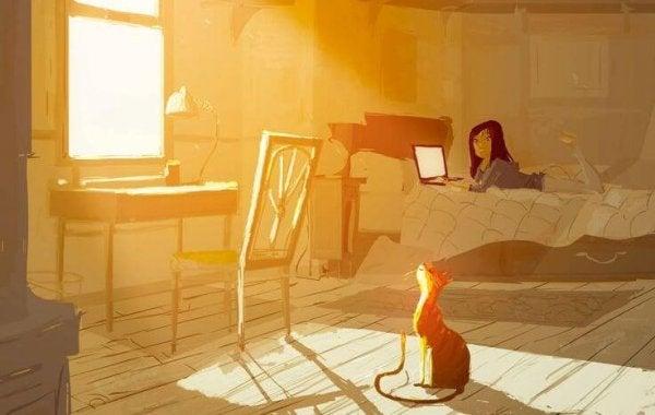 kedi, güneşli oda ve yatakta laptop