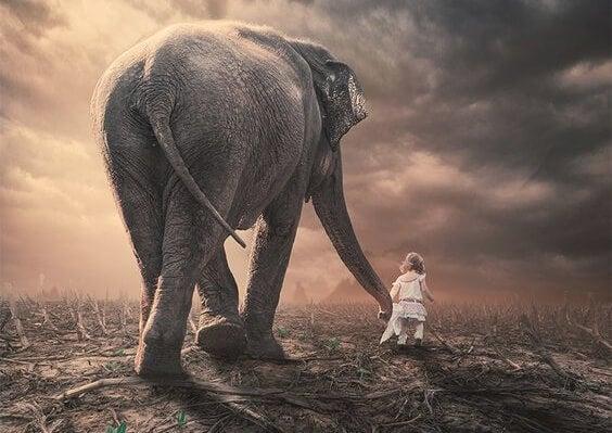fil ve çocuk