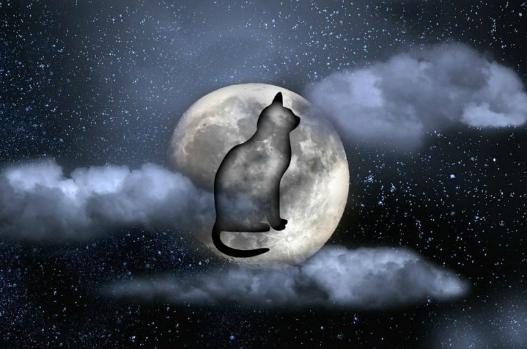 ay ve kedi