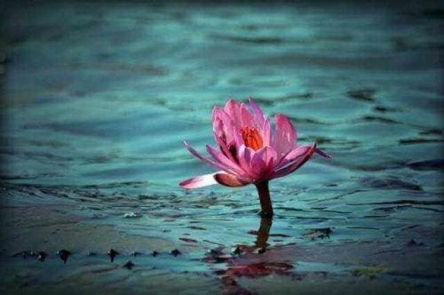 açan çiçek