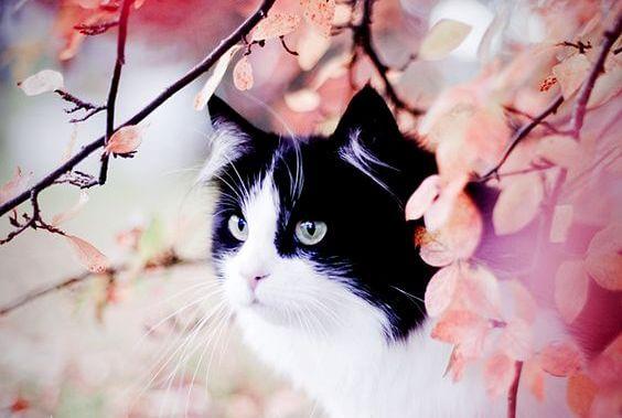 Lekeli Kedi ve Kırlangıç Sinha