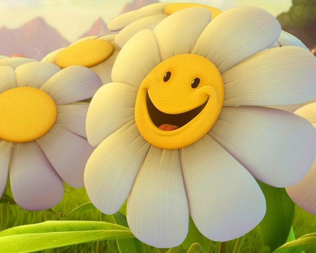 mutlu gülen papatya