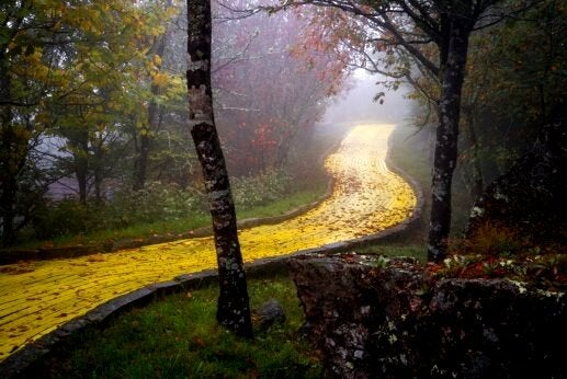 sarı tuğlalı yol