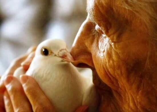 yaşlı ve kuş