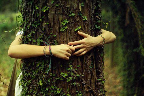 ağaca sarılmak