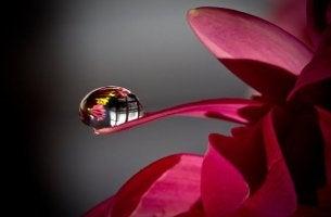 çiçeğin üstündeki su damlası