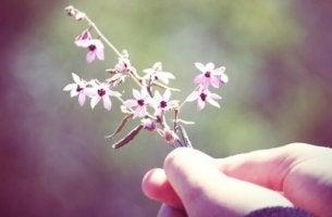 çiçek uzatan el