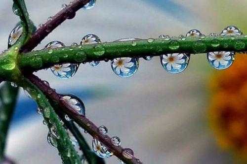 dallar üzerindeki su tanelerindeki çiçekler