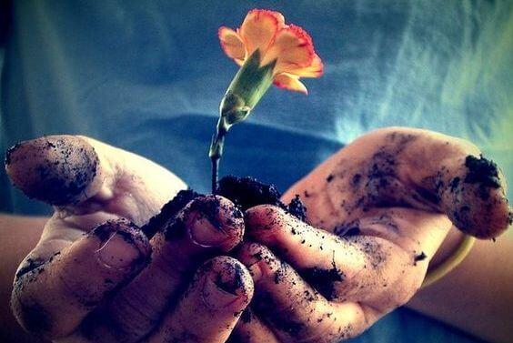 avuç çiçeği