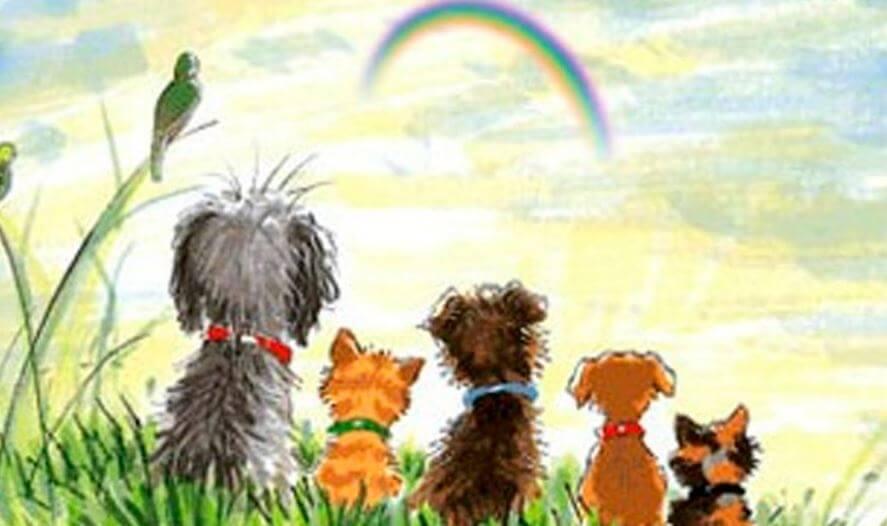 gökkuşağını seyreden köpekler