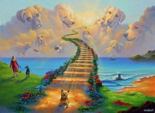 Hayvanlarımız İçin İstirahat Yeri: Gökkuşağı Köprüsü Efsanesi