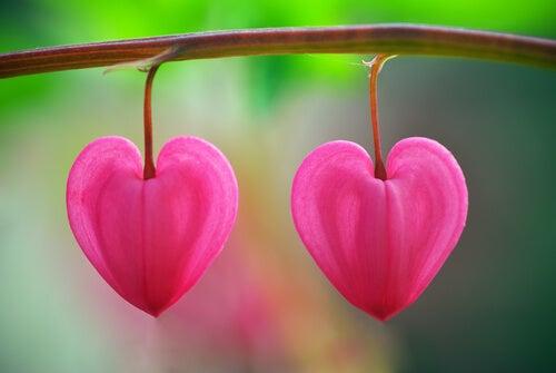 Çöldeki Çiçekler: Aşkı Tanımak İçin Bir Ders