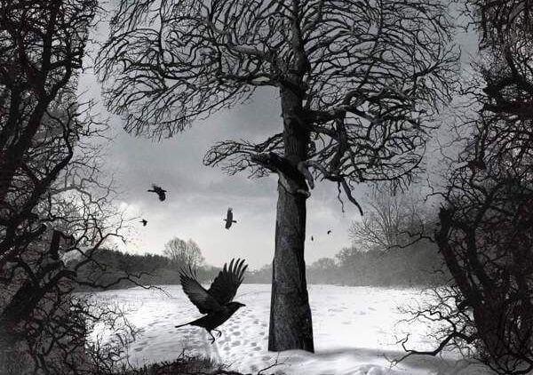 karlı ormanda uçan kuş