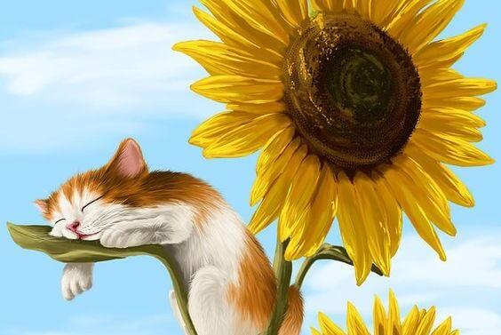 ayçiçeği ve tatlı kedi