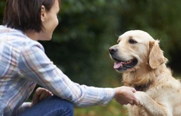 Köpekler, Yüzleri Nasıl Tanır?