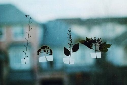 cama yapışmış yapraklar