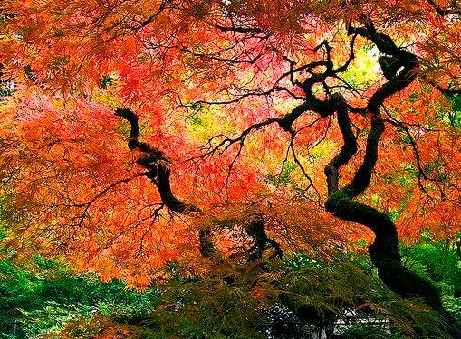 arındıran ağaçlar
