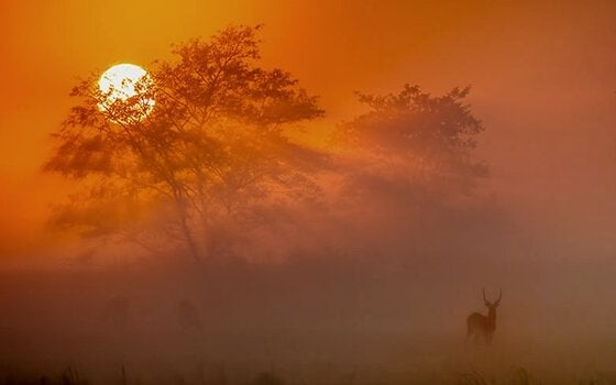 kızıl güneş
