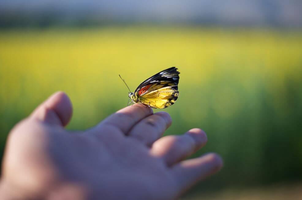 el üstünde duran kelebek
