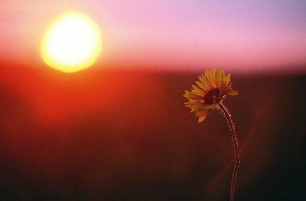 güneş ve çiçek