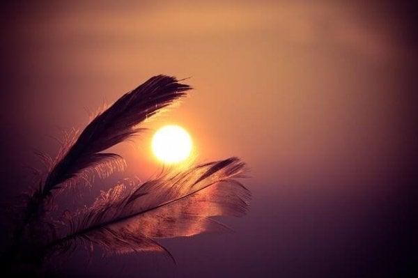 puslu güneşte tüyler