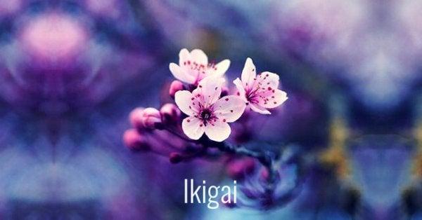 japon çiçeği ve ikigai