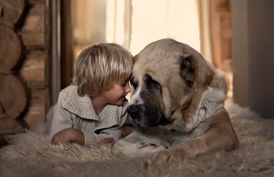 köpek ve çocuk sevgisi