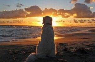 köpek-günbatımı-kumsal