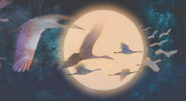 ay önünde uçan kuşlar